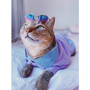 A cat wearing the pet sunglasses.