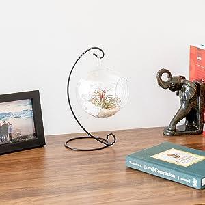 dresser terrarium globe