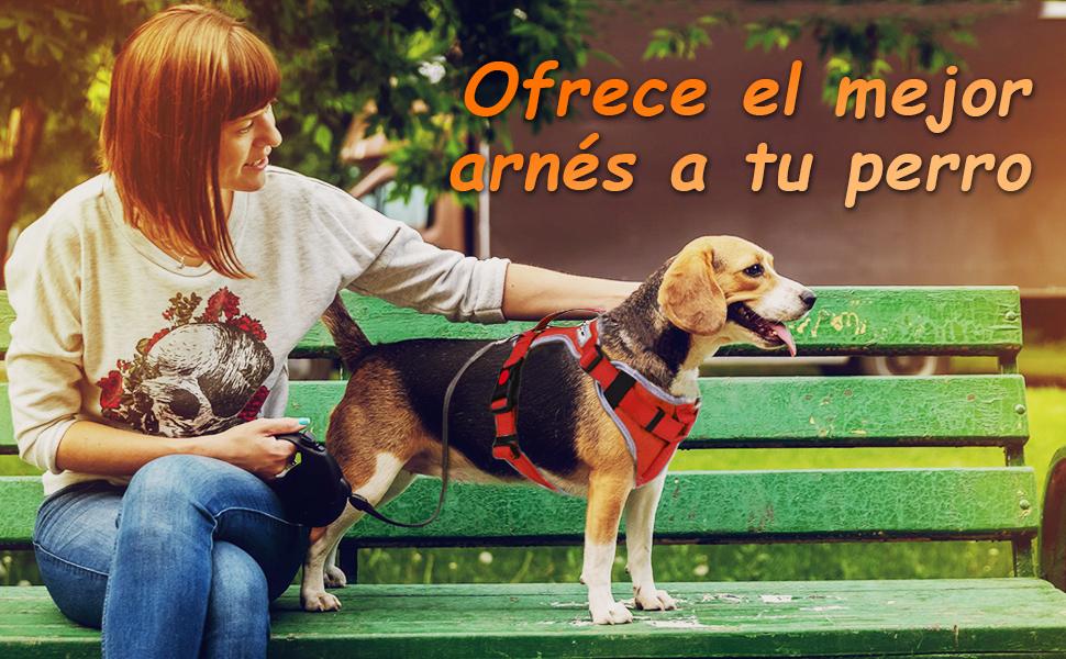 HAPPY HACHI Arnes Perro Chalecos Reflectantes Perros Pequeño ...