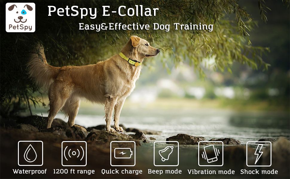 PetSpy dog shock collar with remote dog on the river