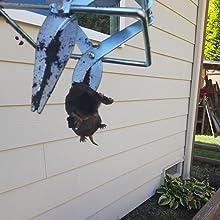 Plunger Mole Trap