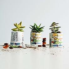 herbaland gummies vitamin supplement vegan collagen plant-based canada skin wrinkle boost