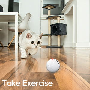 Cat Exercise Toy