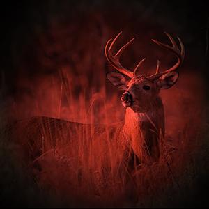 red hunting light headlamp for atronomy