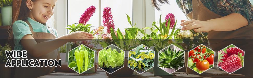 plants light