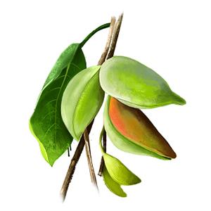 kakadu plum, moisturizing ingredient, anti ageing,nourishing skin,hydration,vitamin c,dark circles