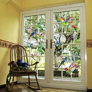 Prevent Bird Strikes on Window