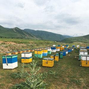高原の巣箱