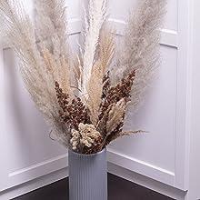 Lila, 3 QIANYUN 3 STK Pampasgras Getrocknet Gro/ß L/änge 120cm Lang Beige- Pampas Grass Blumenstrau/ß Deko Nat/ürlich Trockenblumen f/ür Inneneinrichtungen Fotografie Hochzeit