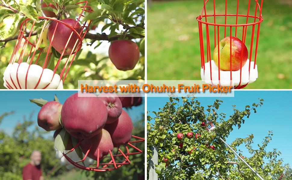 ohuhu fruit picker telescopic pole apple picker