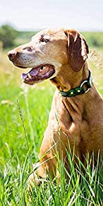 Personalized Camo Waterproof Safety Collar with Nameplate - Custom, Odor Resistant, Safe, Engraved