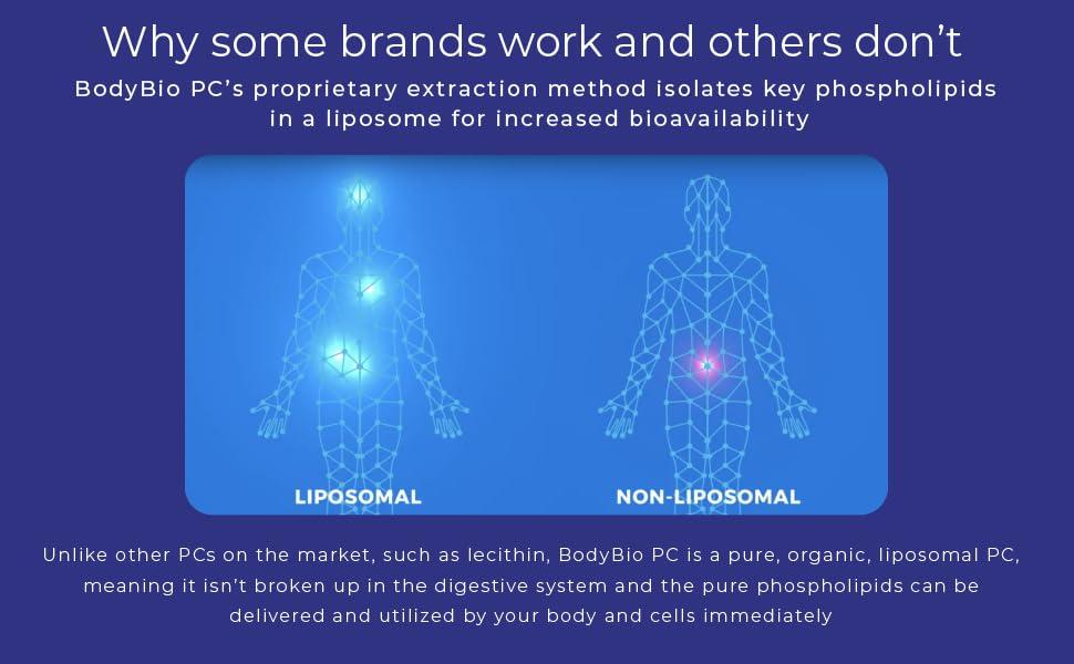 phosphatidylcholine liposomal phospholipids liposome pure organic readily available bioavailable