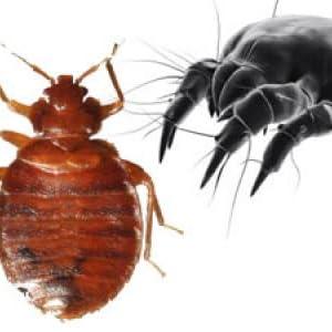 Bed Bug & Dust Mite Resistant