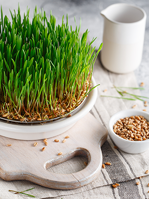sporutable wheat berries wheatberry grass wheatgrass seeds sprouted perfect for sprouting