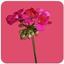 geranium lip balm