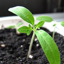 seed tray soil, seedling soil, organic seed soil, plant cuttings soil, cloning soil