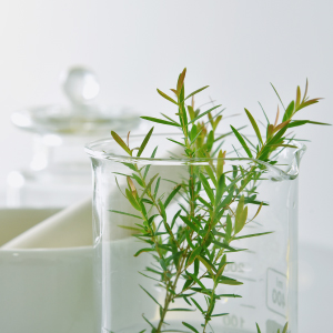 All Natural Massage Oil