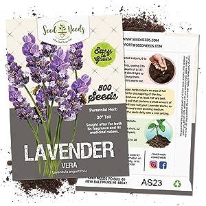vera lavender seeds for planting