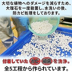 カビキックス 植物 カビ 防カビ カビキラー カビハイター