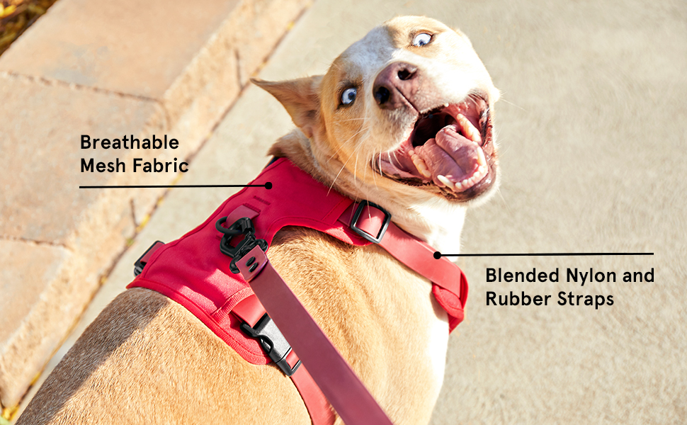 The Essential harness