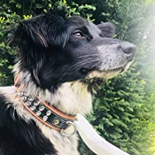 collier de chien en cuir de berger allemand collier de chien en cuir labrador collier de chien