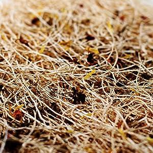 Bedding shavings coop nest