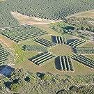 olive oil, grove, plot, land