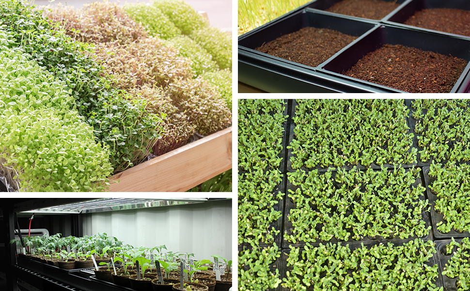 handy pantry plastic grow trays growing microgreens, sprouts, and seed starts