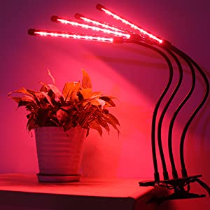 led grow lights for indoor plants