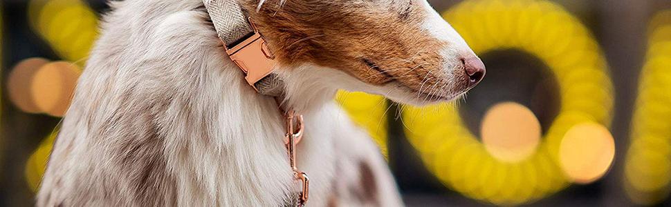 ROSE GOLD DOG COLLAR