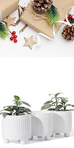 plant pot