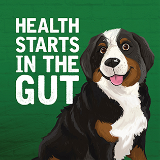 Health Starts in the Gut - Bernie's Perfect Poop