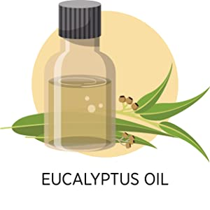 Eucalyptus Oil in a bottle extracted from Eucalyptus leaves