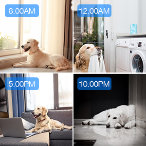 home security pet camera