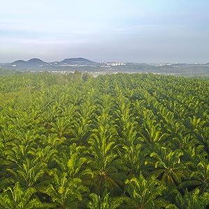 Prasada Sustainable Organic Coconut Flour