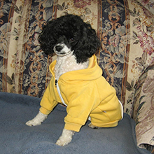 yellow dog clothes