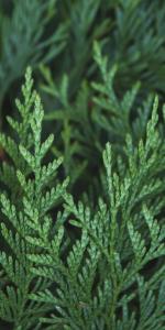 Bergamot Cedar Wood Forest Citrus Natural Organic Soap Salt Soak Mineral Pure Shower