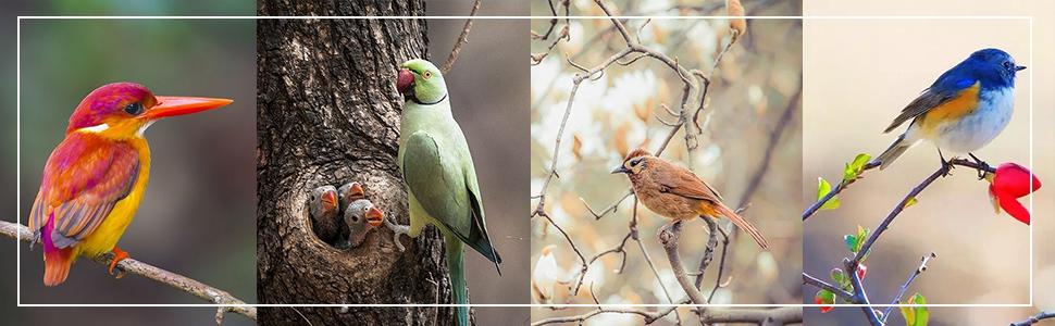 elegant birds valance
