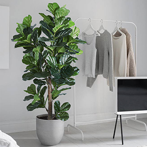 Fake Plant for Office
