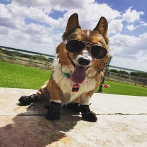 Zouminyy Zouminy 4pcs Silicona Perro Mascota Lindo Botas Impermeables antirresbaladizas Zapatos de Lluvia de protecci/ón para Perros peque/ños M-Negro