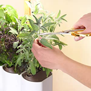 pret a pousser lilo connect