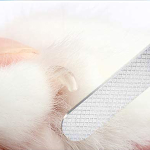 dog nail clippers for dog
