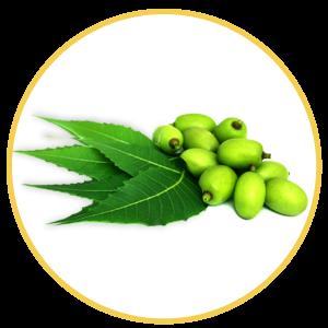 Herbopile Ingredient: Lembodi