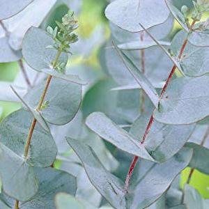 Balance Me Eucalyptus Calming Redness Inflammation