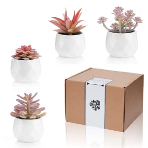 decorations for women girls design decor cactus pink room aesthetic rose gold