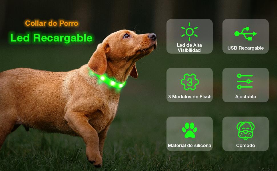 Raffaelo Collar de Perro LED, Collar de Perro LED Intermitente ...