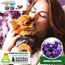 barking, small, items, car, scratching, carrier, carriers, nail, clipper, attract, chews, wall,