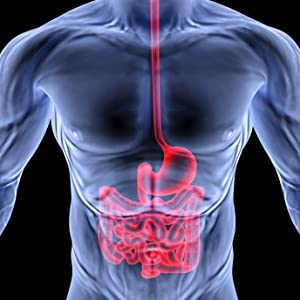 illustration of digestive tract