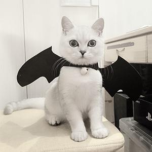 A cat bat.