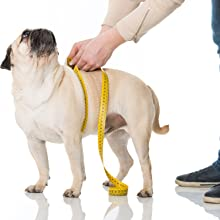 measuring dog harness mesh